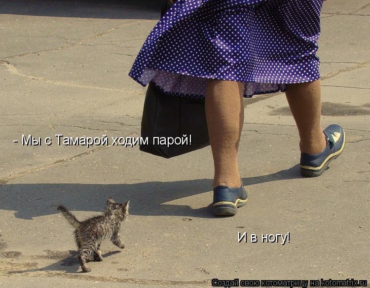 Котоматрица: - Мы с Тамарой ходим парой! И в ногу!