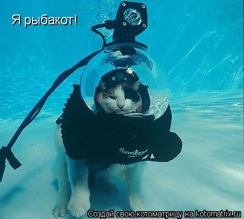 Котоматрица: Я рыбакот!