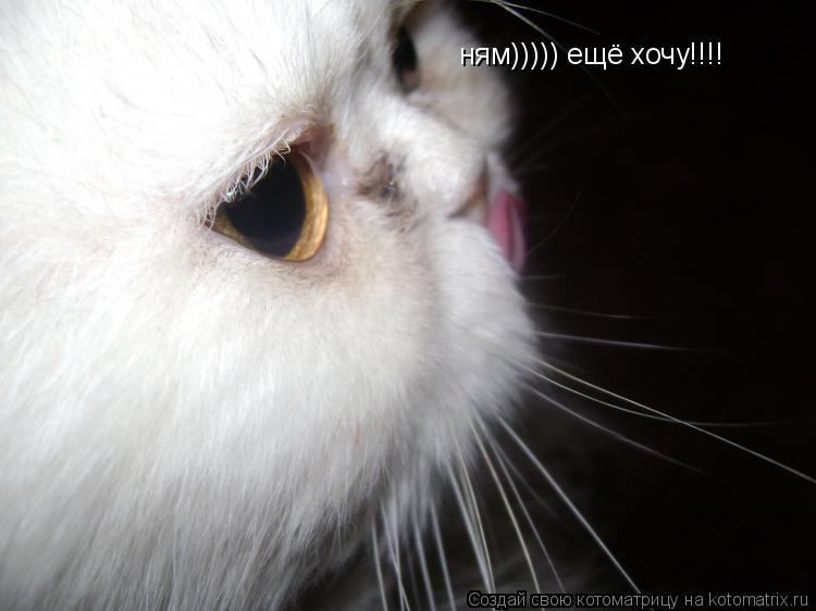 Котоматрица: ням))))) ещё хочу!!!!
