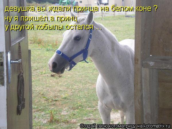 Котоматрица: девушка,вы ждали принца на белом коне ? ну я пришёл,а принц   у другой кобылы остался ...