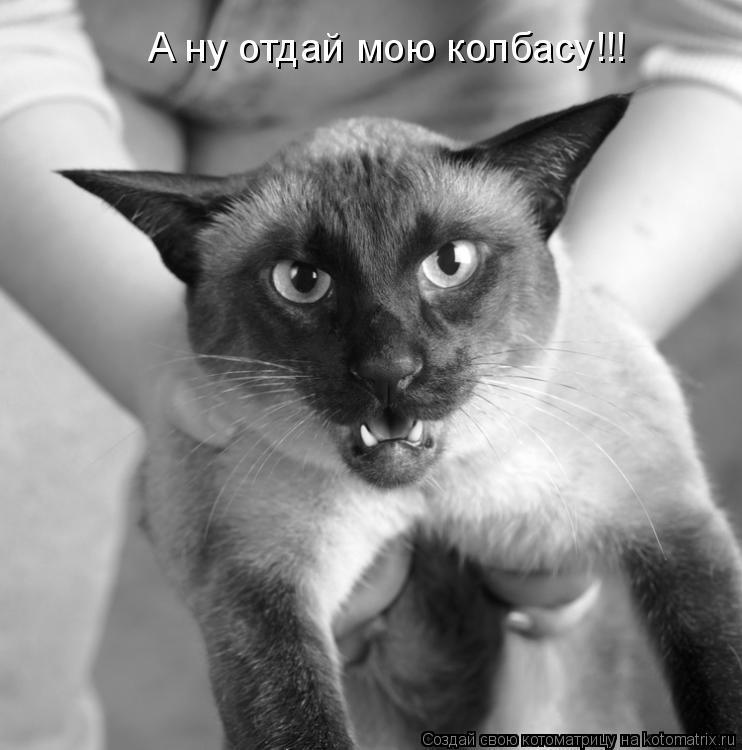 Котоматрица: А ну отдай мою колбасу!!!