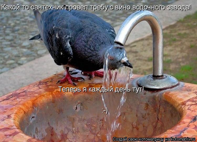 Котоматрица: Какой то сантехник провел требу с вино водочного завода! :-) Теперь я каждый день тут!