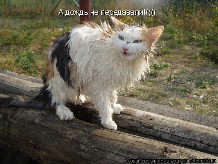 Котоматрица: А дождь не передавали!((((