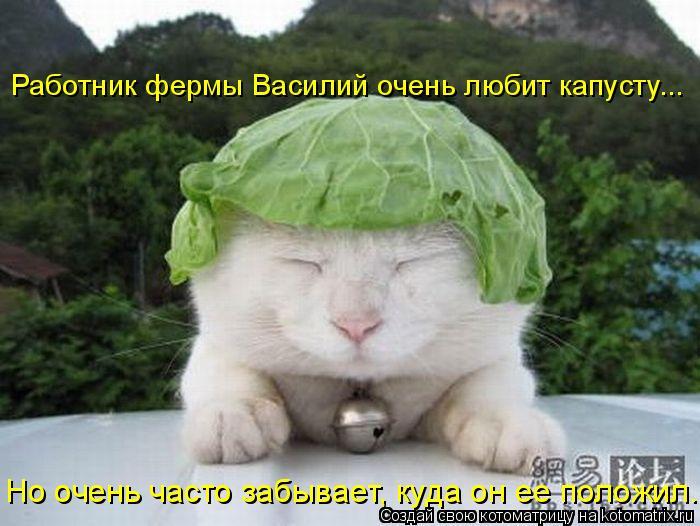 Котоматрица: Работник фермы Василий очень любит капусту... Но очень часто забывает, куда он ее положил.
