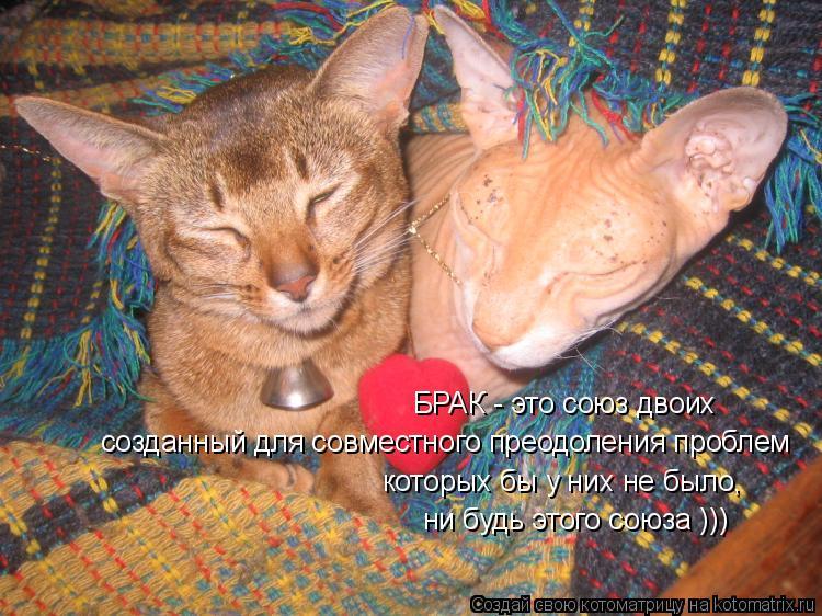 Котоматрица: БРАК - это союз двоих созданный для совместного преодоления проблем которых бы у них не было, ни будь этого союза )))