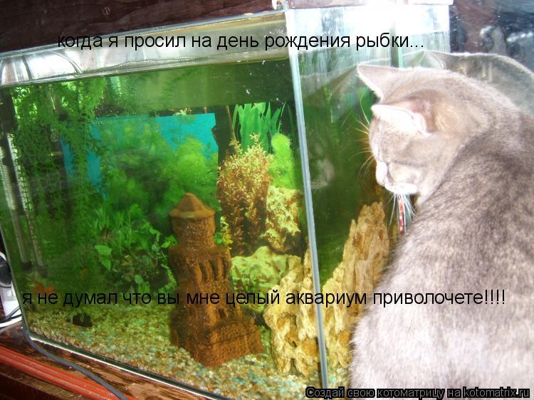Котоматрица: когда я просил на день рождения рыбки... я не думал что вы мне целый аквариум приволочете!!!!