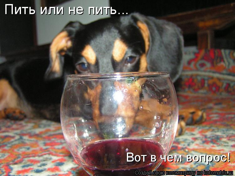 Котоматрица: Пить или не пить... Вот в чем вопрос!