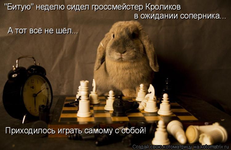 """Котоматрица: """"Битую"""" неделю сидел гроссмейстер Кроликов в ожидании соперника... А тот всё не шёл... Приходилось играть самому с собой!"""