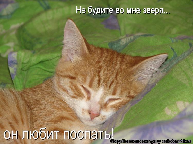 Котоматрица: Не будите во мне зверя... он любит поспать!
