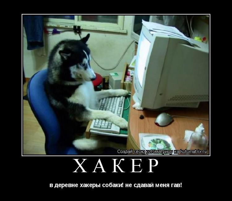 Котоматрица: хакер в деревне хакеры собаки! не сдавай меня гав!