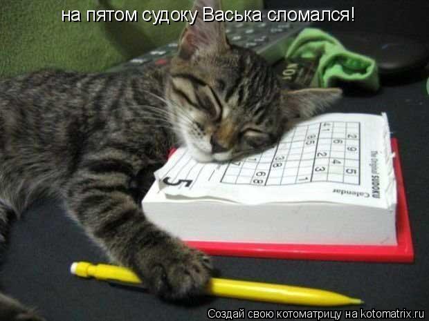 Котоматрица: на пятом судоку Васька сломался!