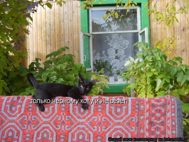 Котоматрица: только чёрному коту и не везет!