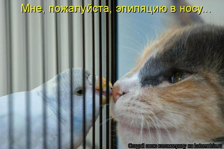 Котоматрица - Мне, пожалуйста, эпиляцию в носу...
