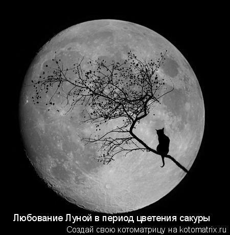 Котоматрица: Любование Луной в период цветения сакуры