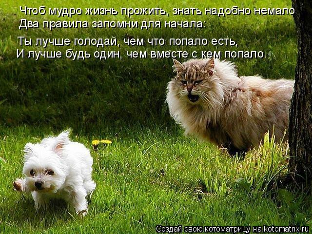 Котоматрица: Чтоб мудро жизнь прожить, знать надобно немало Два правила запомни для начала: Ты лучше голодай, чем что попало есть, И лучше будь один, чем в
