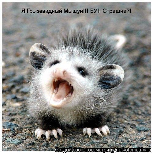 Котоматрица: Я Грызевидный Мышун!!! БУ!! Страшна?!