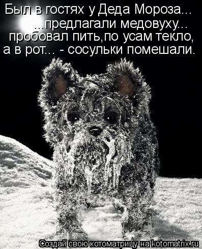 Котоматрица: Был в гостях у Деда Мороза... ...предлагали медовуху... пробовал пить,по усам текло, а в рот... - сосульки помешали.