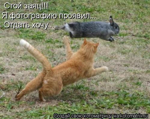 Котоматрица: Стой заяц!!! Я фотографию проявил... Отдать хочу...