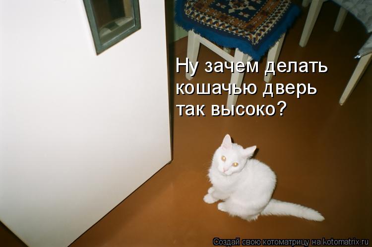 Котоматрица: Ну зачем делать  кошачью дверь так высоко?