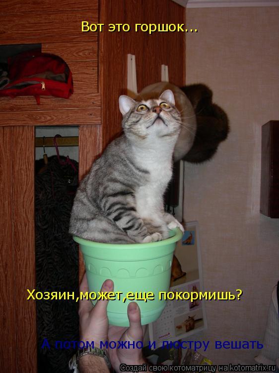 Котоматрица: Вот это горшок... Хозяин,может,еще покормишь? А потом можно и люстру вешать