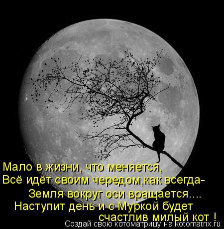 Котоматрица: Мало в жизни, что меняется, Всё идёт своим чередом,как всегда- Земля вокруг оси вращается.... Наступит день и с Муркой будет счастлив милый ко