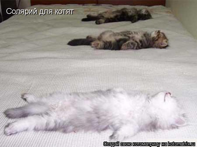 Котоматрица: Солярий для котят