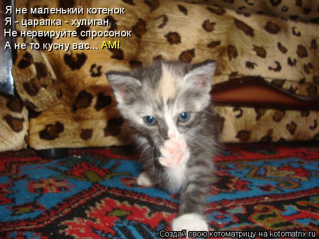 Котоматрица: Я не маленький котенок Я - царапка - хулиган Не нервируйте спросонок А не то кусну вас... АМ!