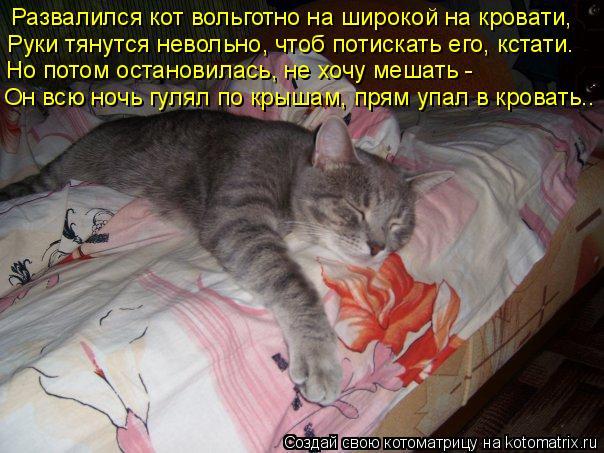Котоматрица: Развалился кот вольготно на широкой на кровати, Руки тянутся невольно, чтоб потискать его, кстати. Но потом остановилась, не хочу мешать - Он
