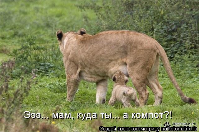 Котоматрица: Эээ... мам, куда ты... а компот?!