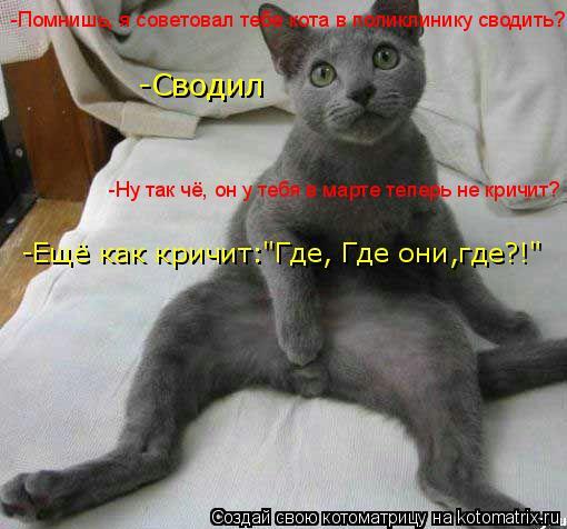 """Котоматрица: -Сводил -Помнишь, я советовал тебе кота в поликлинику сводить? -Ещё как кричит:""""Где, Где они,где?!"""" -Ну так чё, он у тебя в марте теперь не кричит?"""