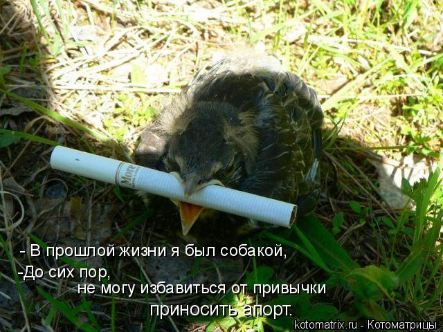 Котоматрица: - В прошлой жизни я был собакой,  -До сих пор,  не могу избавиться от привычки  приносить апорт…