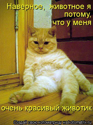 Котоматрица: Наверное,  животное я потому, что у меня очень красивый животик