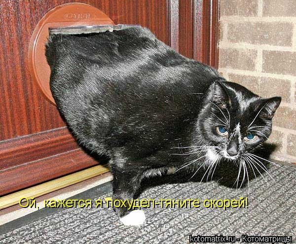 Котоматрица: Ой, кажется я похудел-тяните скорей!