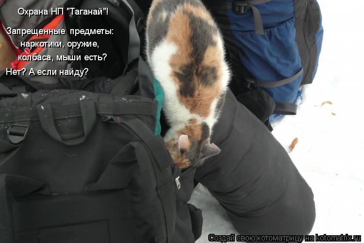 """Котоматрица: Охрана НП """"Таганай""""!  Запрещенные  предметы: колбаса, мыши есть? наркотики, оружие, Нет? А если найду?"""