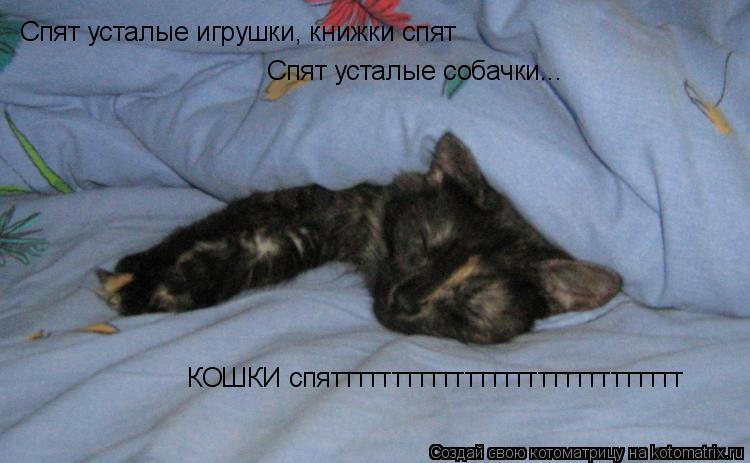 Котоматрица: Спят усталые игрушки, книжки спят Спят усталые собачки... КОШКИ спяттттттттттттттттттттттттттттт