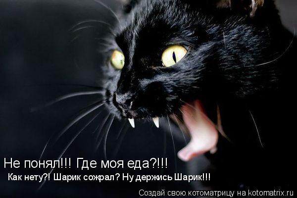 Котоматрица: Не понял!!! Где моя еда?!!! Как нету?! Шарик сожрал? Ну держись Шарик!!!