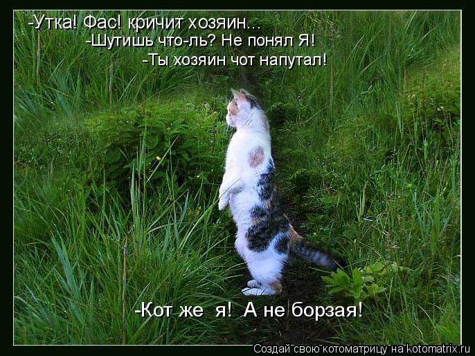 Котоматрица: -Утка! Фас! кричит хозяин... -Шутишь что-ль? Не понял Я!  -Ты хозяин чот напутал! -Кот же  я!  А не борзая!