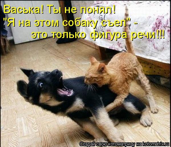 """Котоматрица: Васька! Ты не понял! """"Я на этом собаку съел"""" -  это только фигура речи!!!"""