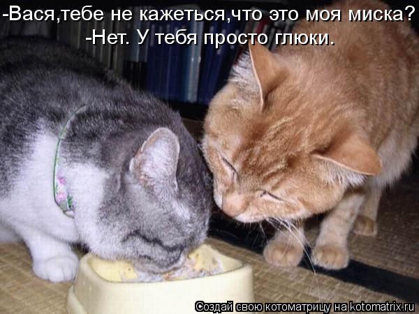 Котоматрица: -Вася,тебе не кажеться,что это моя миска? -Нет. У тебя просто глюки.