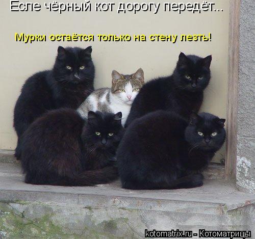 Котоматрица: Есле чёрный кот дорогу передёт... Мурки остаётся только на стену лезть!