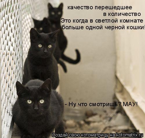 Котоматрица: качество перешедшее в количество Это когда в светлой комнате больше одной черной кошки! - Ну что смотришь? МАУ!
