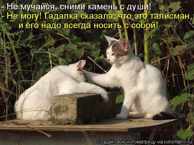 Котоматрица: - Не мучайся, сними камень с души! - Не могу! Гадалка сказала, что это талисман, и его надо всегда носить с собой!