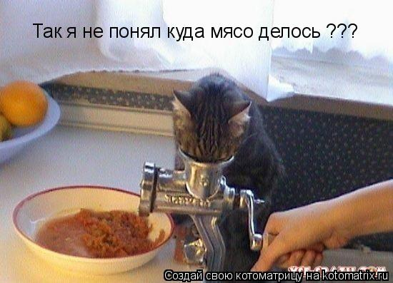 Котоматрица: Так я не понял куда мясо делось ???