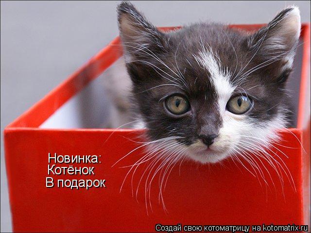 Котоматрица: Новинка: Котёнок В подарок