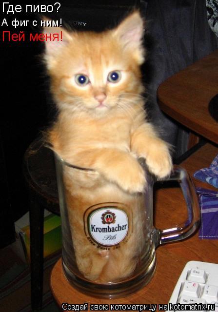 Котоматрица: Где пиво? А фиг с ним! Пей меня!