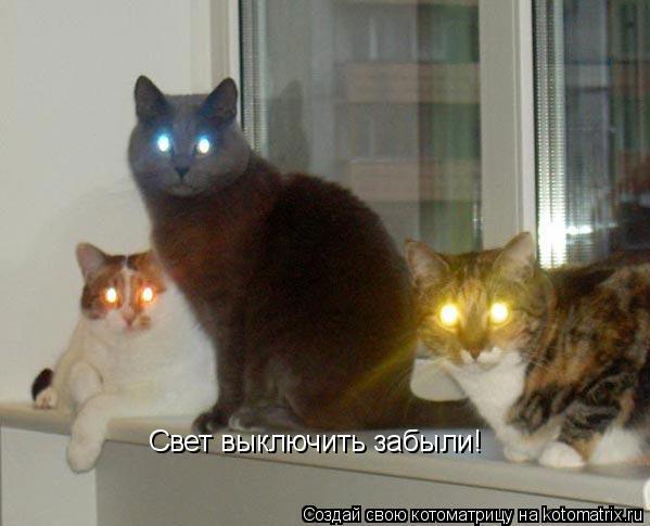 Котоматрица: Свет выключить забыли!