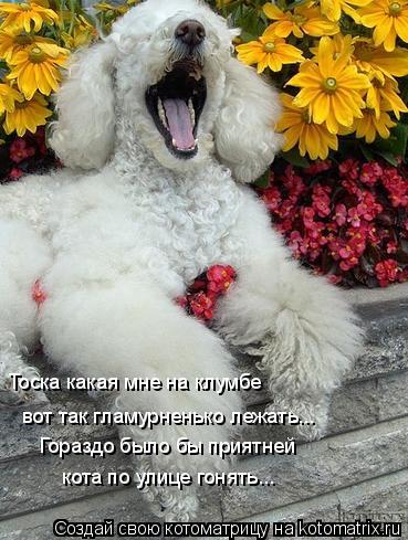 Котоматрица: Тоска какая мне на клумбе  вот так гламурненько лежать... Гораздо было бы приятней  кота по улице гонять...
