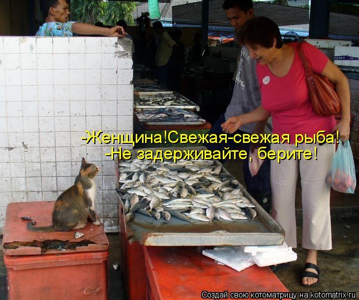 Котоматрица: -Женщина!Свежая-свежая рыба! -Не задерживайте, берите!