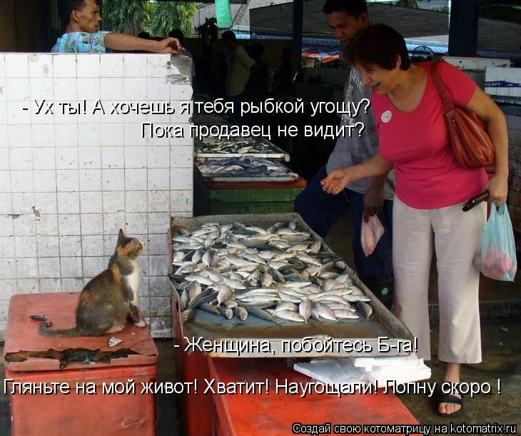 Котоматрица: - Ух ты! А хочешь я тебя рыбкой угощу? - Женщина, побойтесь Б-га!  Пока продавец не видит? Гляньте на мой живот! Хватит! Наугощали! Лопну скоро !