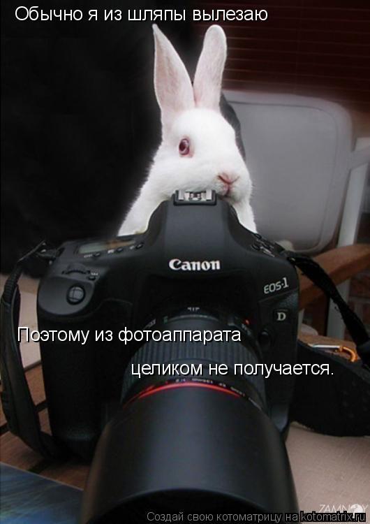 Котоматрица: Обычно я из шляпы вылезаю Поэтому из фотоаппарата целиком не получается.